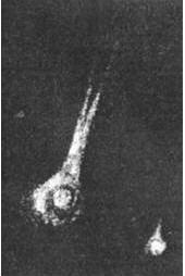 Набросок кометы Биелы